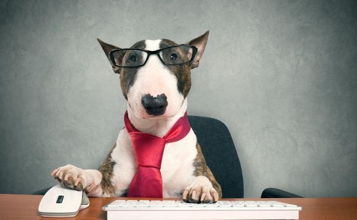 בדיחה כלב בראיון עבודה:כלב עם משקפיים יושב מול מחשב