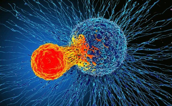 הקשר שבין השמנת יתר וסרטן: תא סרטני
