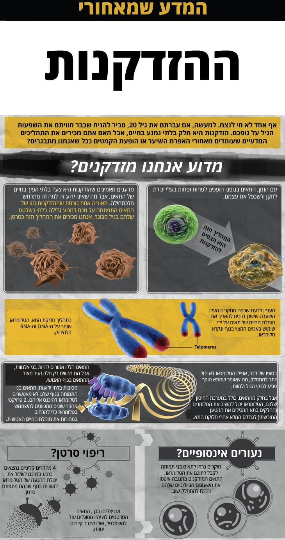 אינפוגרפיקה - המדע שמאחורי ההזדקנות