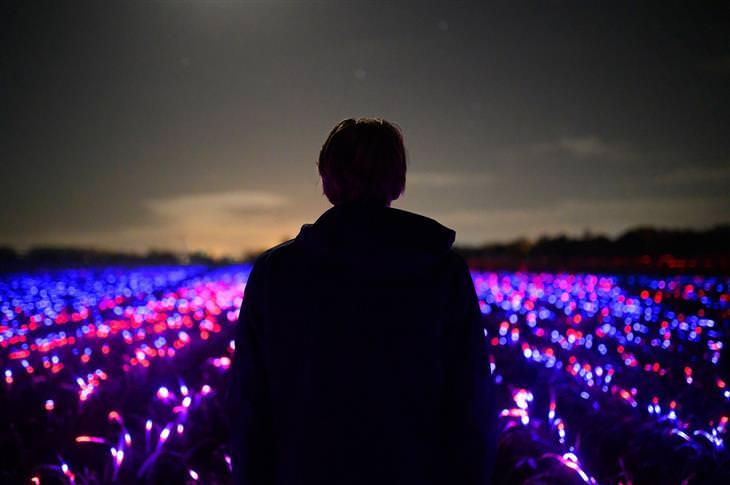 פרויקט חקלאי על בסיס תאורה מיוחדת: אדם עומד מול השדה המואר בפרויקט Grow