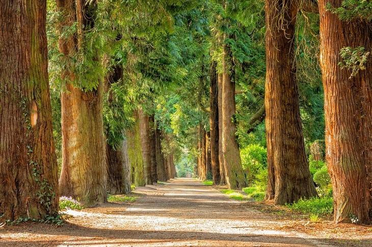 עובדות על עצים: שדרת עצים
