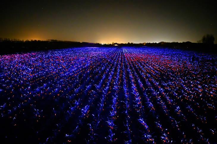 פרויקט חקלאי על בסיס תאורה מיוחדת: שדה מואר בפרויקט Glow