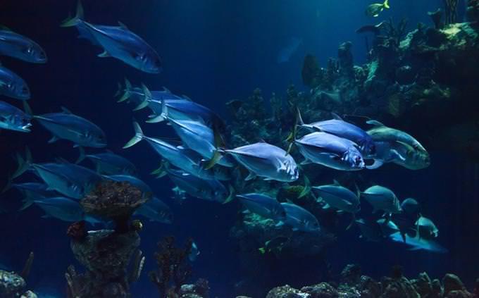 טריוויה על חיות: דגים