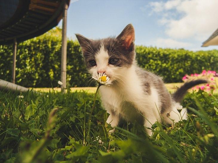 סוגי צואה של כלבים וחתולים: חתול מריח פרח