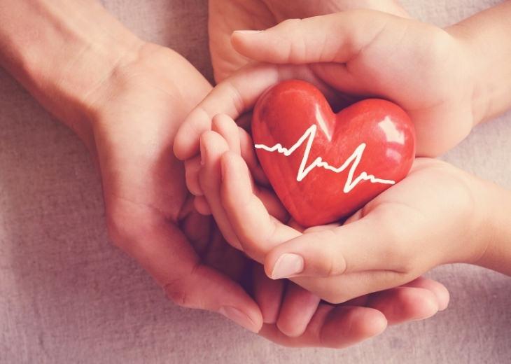 מחקר על בשר אדום ובריאות הלב: ידיים מחזיקות דגם של לב ועליו קווי א.ק.ג