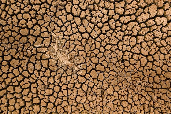 תמונות מתחרות צילום שימור הטבע 2021: צילום גובה של קיימן ז'קרה