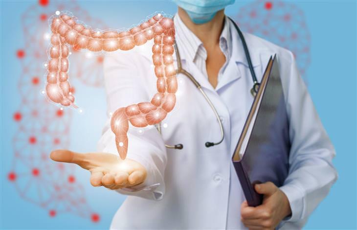 מחקר על צריכת תרד כמונעת סרטן המעי הגס: איור של רופא מציג בידו דגם של המעי הגס