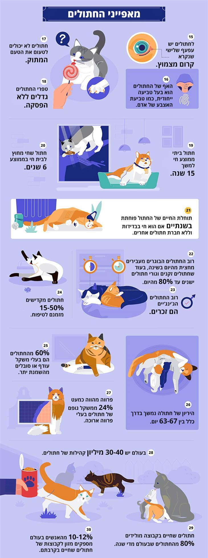 עובדות על חתולים: מאפייני החתולים