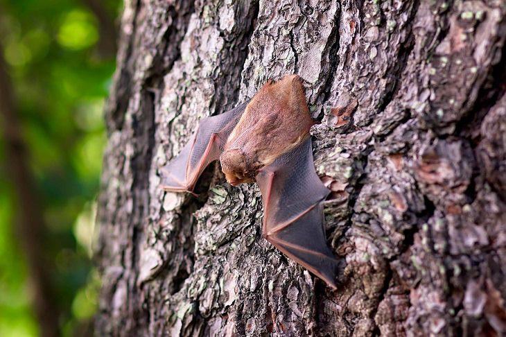 מחקר על הקשר בין מגפת הקורונה להתחממות הגלובלית: עטלף על גזע