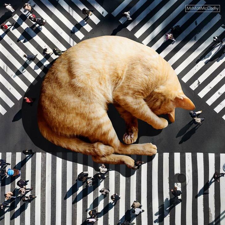 חתולי ענק: חתול ענק על מעבר חצייה