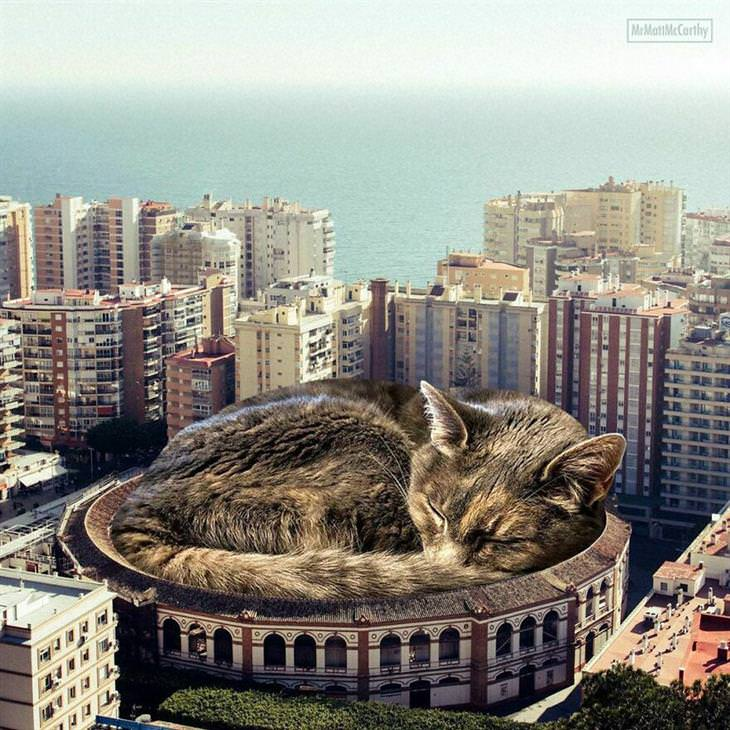 חתולי ענק: חתול ענק ישן באיצטדיון