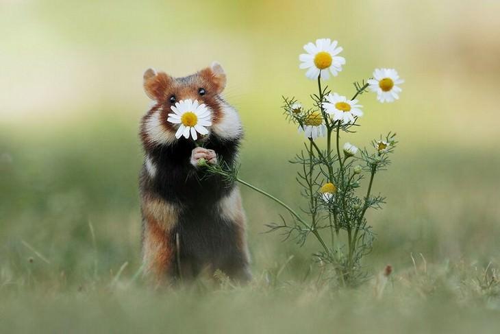 חיות קטנות וחמודות: עכבר מחזיק פרח