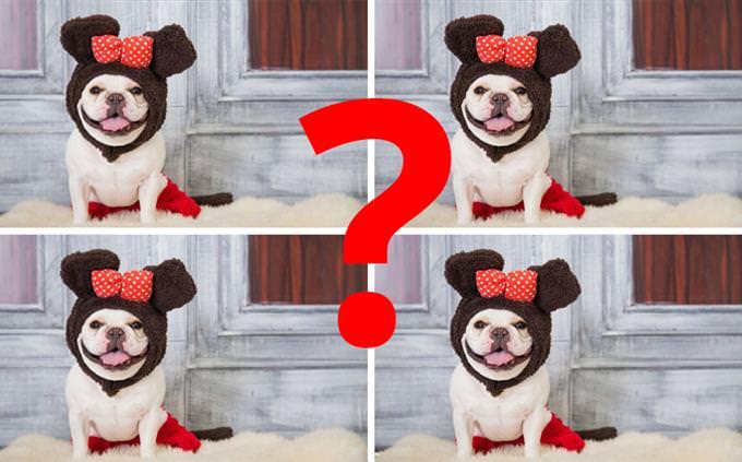 """חידון """"מצא את ההבדלים"""" לפורים: כלבים מחופשים"""