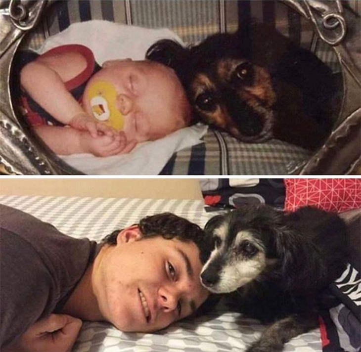 כלבים כגורים וכבוגרים: כלב עם הבעלים שלו - למעלה הבעלים תינוק, ולמטה הוא מתבגר