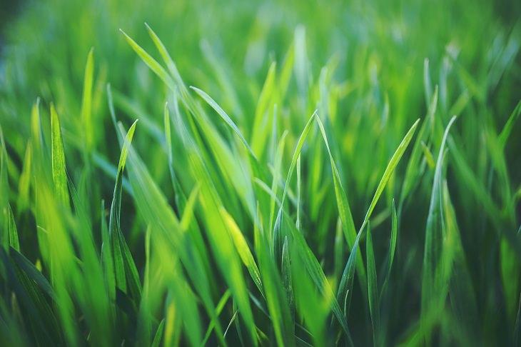 דברים שתתחרטו עליהם בעתיד: דשא ירוק