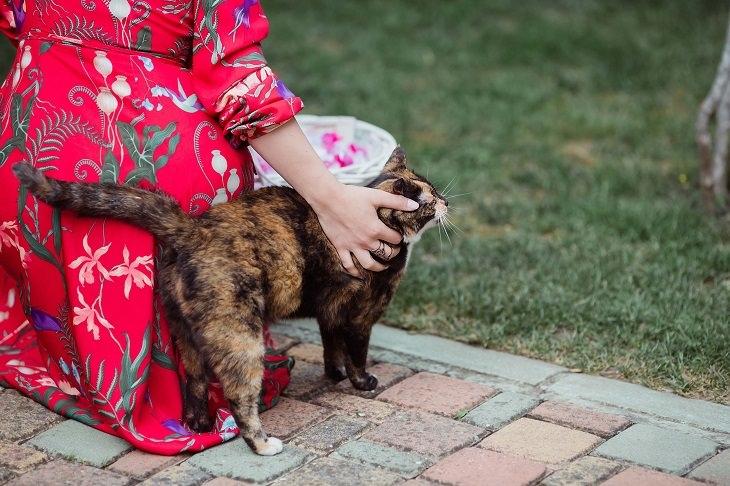 שיטות לגרום לחתול שלכם לאהוב אתכם יותר: אישה מלטפת את החתול שלה