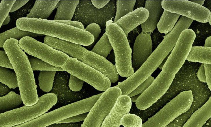 סיבות לחוסר תיאבון: בקטריות