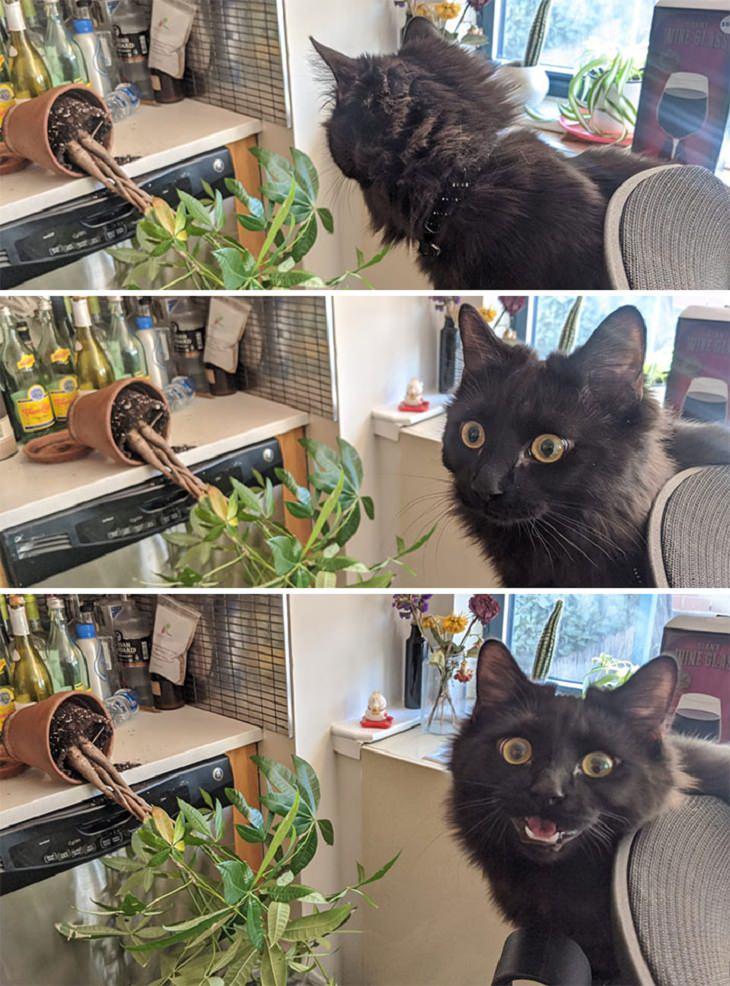 חיות שנתפסו שנייה אחרי שעשו נזק: חתול מסתכל על עציץ נופל, ואז הוא המום ומחייך