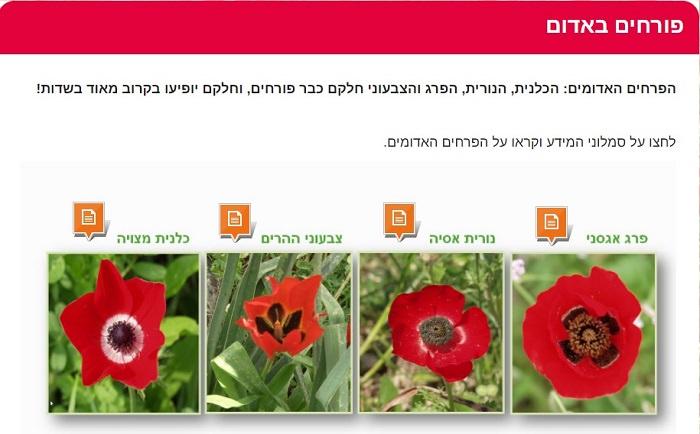 """פעילויות חינוכיות לילדים לחג פסח: עמוד """"פורחים באדום"""" באתר"""