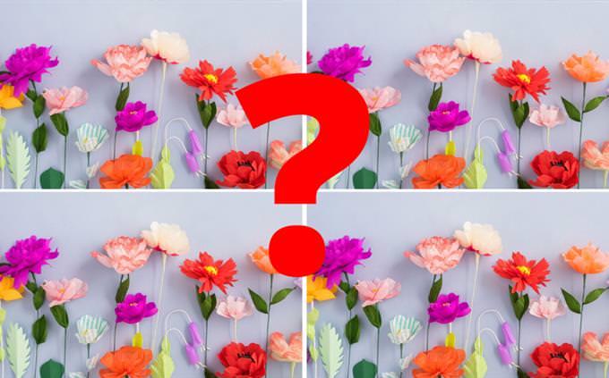 פרחים וסימן שאלה