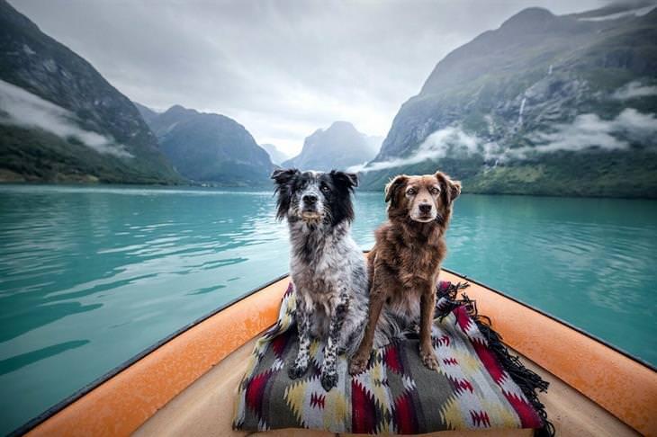 כלבים מטיילים בנורווגיה: כלבים שטים על סירה ליד הרים