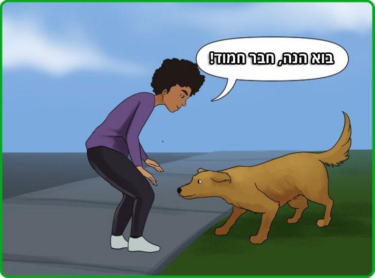 טיפים להתחברות עם כלבים: ילד קורא לכלב לגשת אליו ולרחרח אותו