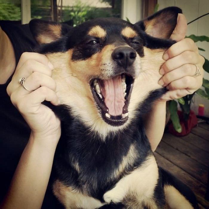 כלבים חמודים ומצחיקים עם הרבה עור פנים