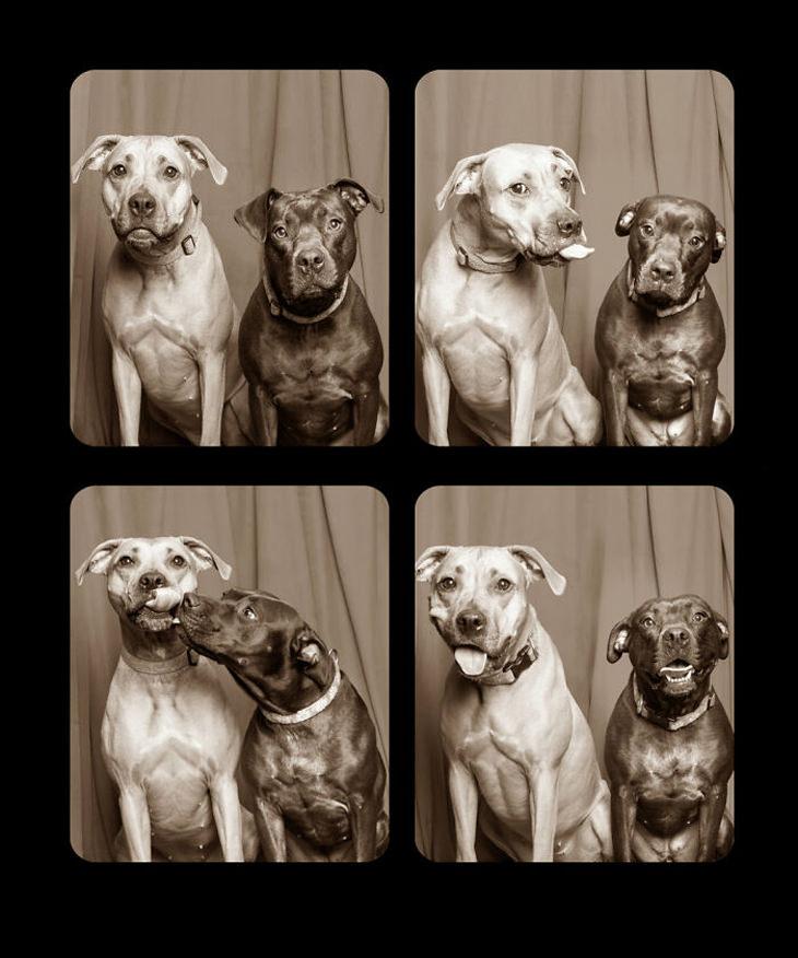 כלבים בתא צילום: זוג כלבים בתמונות מתא הצילום