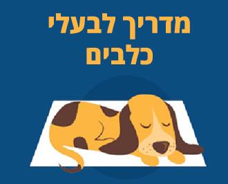 איך להרגיל את חיית המחמד לישון במיטה: מדריך לבעלי כלבים