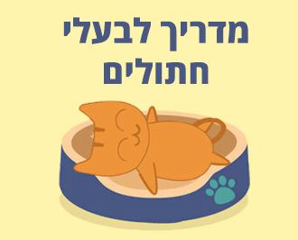 איך להרגיל את חיית המחמד לישון במיטה: מדריך לבעלי חתולים