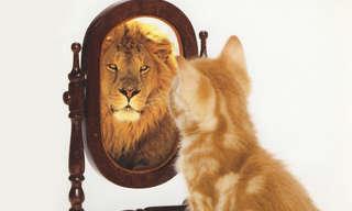 אוסף כתבות בנושא ביטחון, הערכה ואהבה עצמיים: חתול מביט במראה ורואה דמות אריה