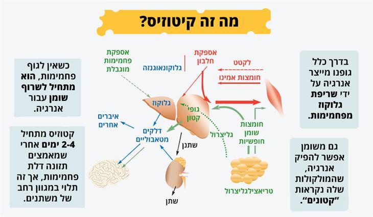 דיאטה קטוגנית: מה זה קיטוזיס?