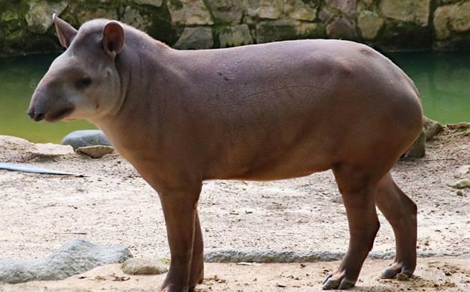 מבחן זיהוי מיני בעלי חיים: בעל חיים