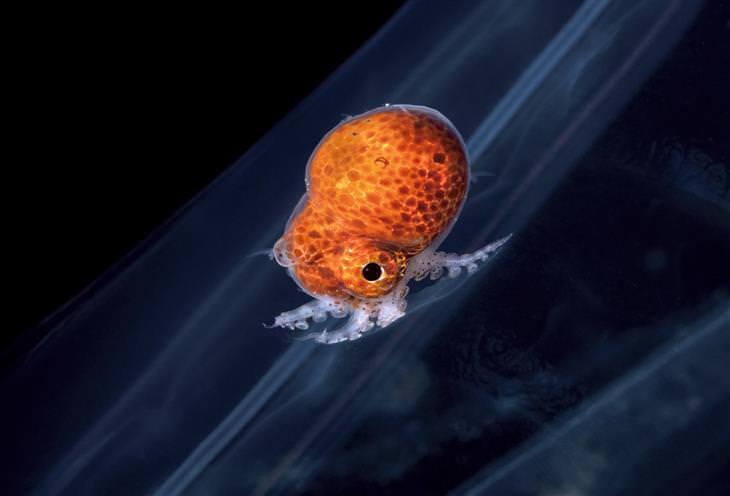תמונות של יצורים תת-ימיים: יצור תת ימי