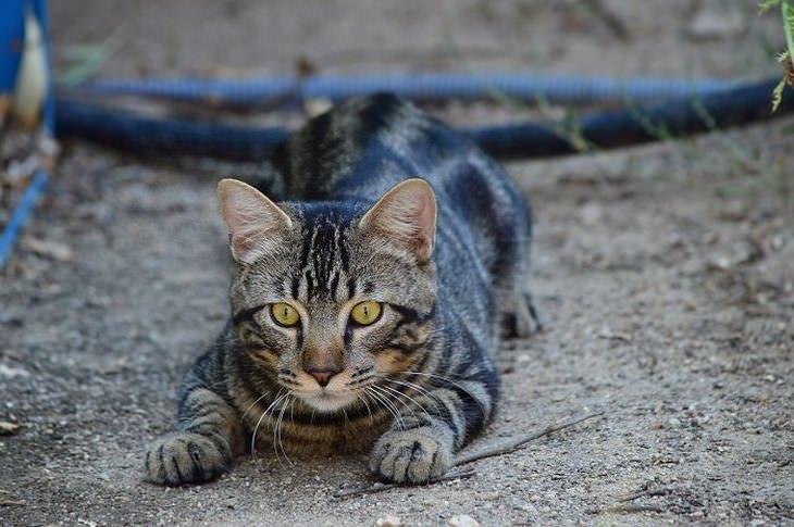 איך להיפטר מעכבישים: חתול