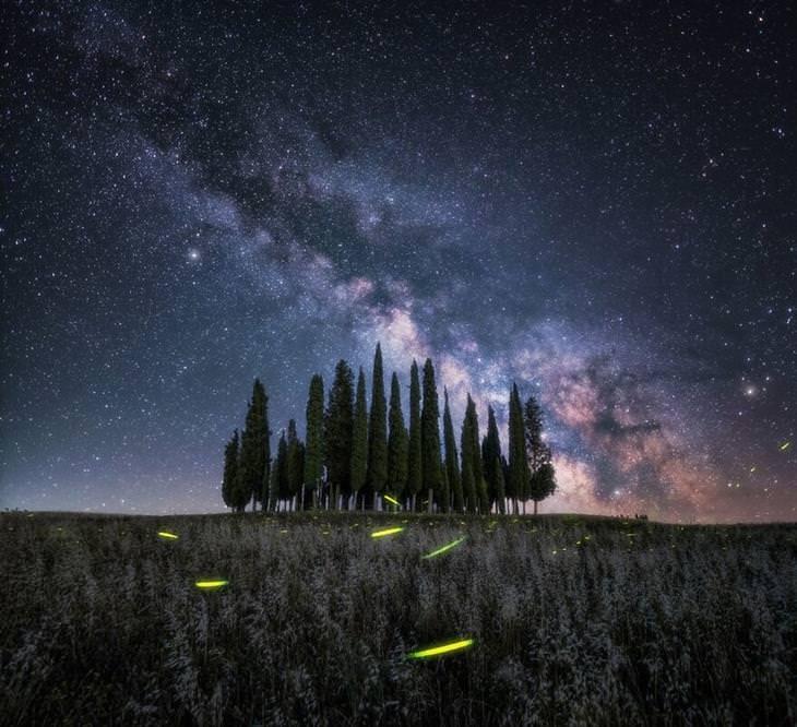 תמונות אומנותיות - עצים וכוכבים