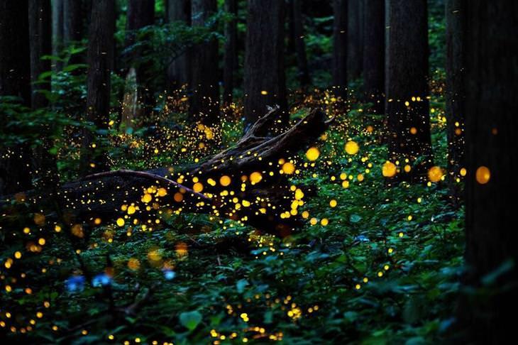 תמונות זוכות מתחרות הצילום Px3: גחליליות ביער