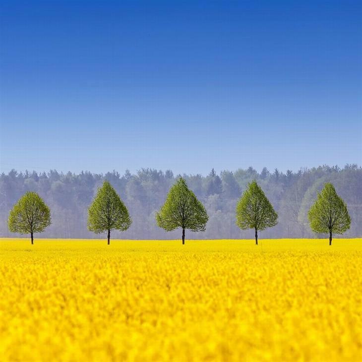 תמונות זוכות מתחרות הצילום Px3: עצים שנראים כמו עלים