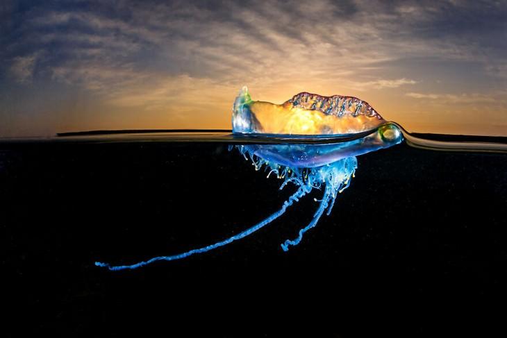 תחרות צילומי טבע: מדוזה בים על רק השקיעה