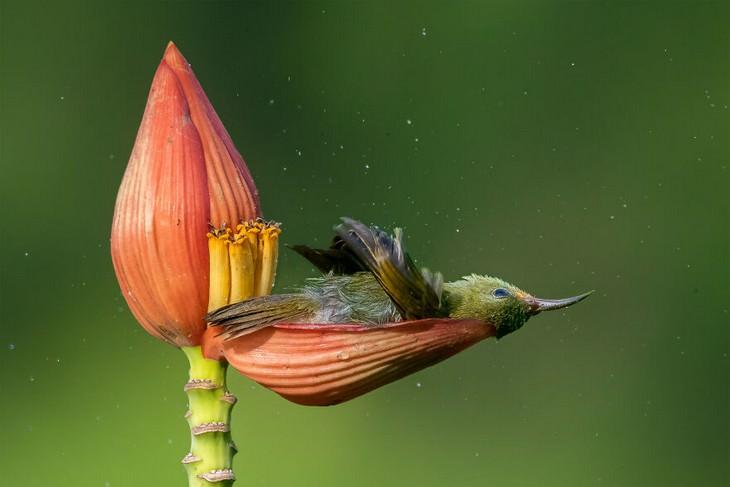 תחרות צילומי טבע: ציפור על עלה כותרת