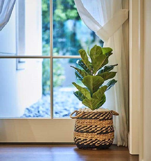 טיפים לעיצוב הבית עם תקציב מוגבל: עציץ בסלון