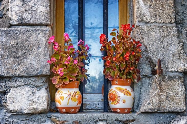 פרחים היפו אלרגניים: עציצי בגוניה