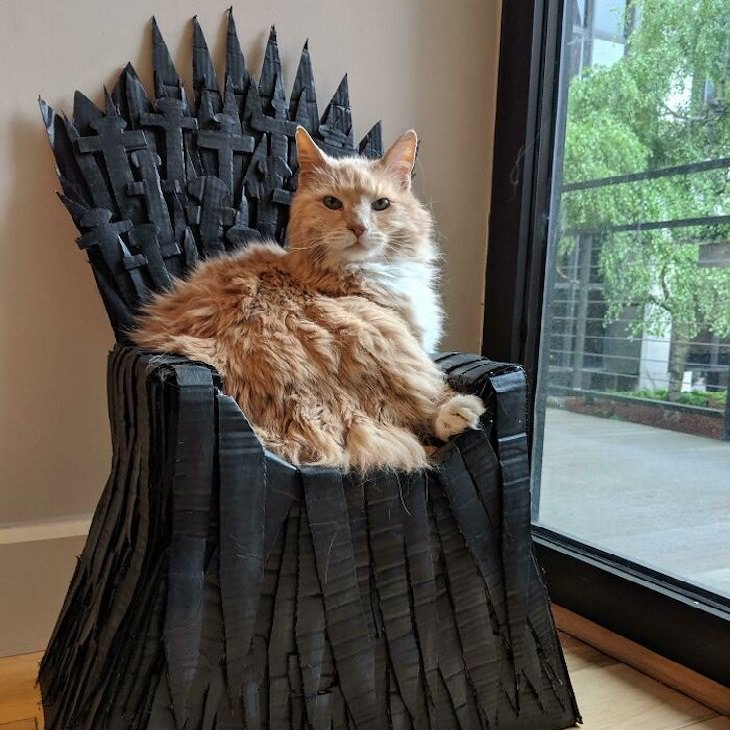 חתולים מפונקים ומצחיקים: חתול על כיסא מלכות קטן