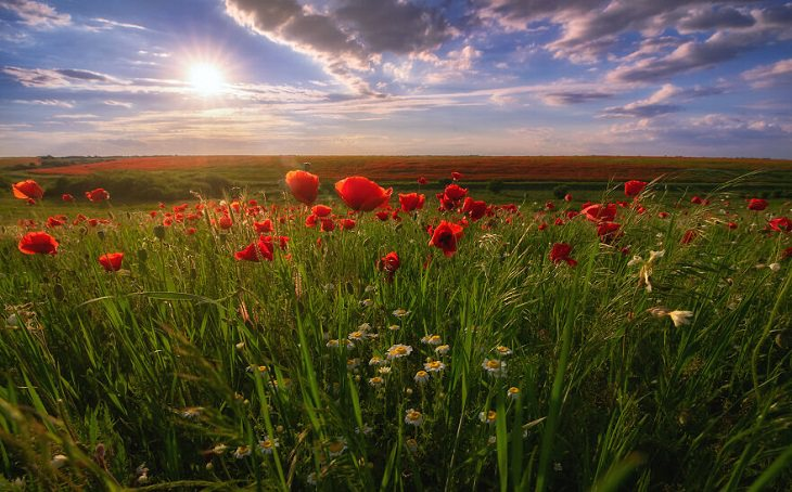 תמונות של אנשים ונוף מרומניה: זריחה מעל שדה פרחים