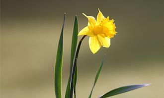 מבחן זיהוי פרחים: פרח צהוב