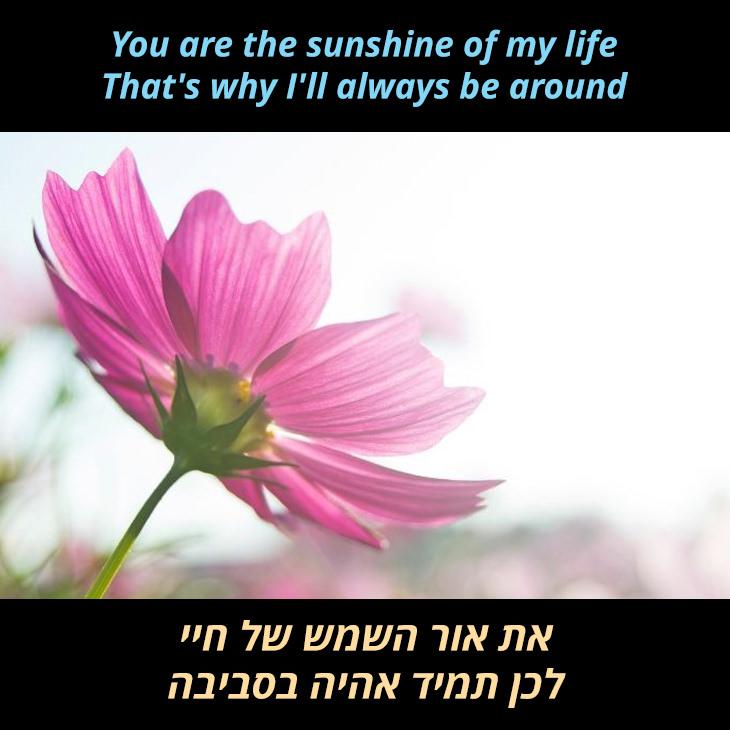 תרגום לשיר You Are the Sunshine of My Life: את אור השמש של חיי לכן תמיד אהיה בסביבה