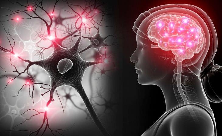 איך למנוע חרדות על פי התיאוריה הפולי-וגאלית: מערכת עצבים