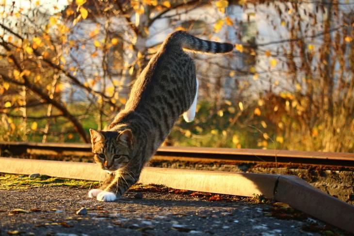 מיתוסים על כלבים וחתולים: חתול מנתר