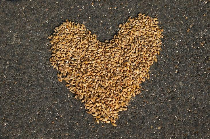 מחקר על היתרונות בצריכת דגנים מלאים: זרעי דגנים מסודרים בצורת לב על הקרקע