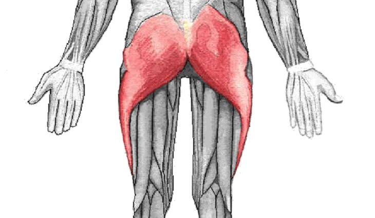 תרגיל הגשר הדינמי: שרירי העכוז